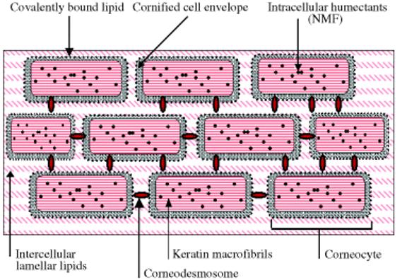 brick-and-mortar-skin-barrier
